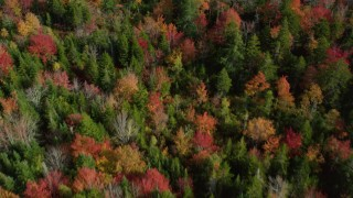 AX148_049 - 6k stock footage aerial video of a bird's eye view flying over a colorful forest in autumn, Cushing, Maine