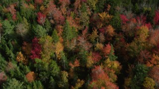 AX148_050 - 6k stock footage aerial video of a bird's eye view flying over a colorful forest, autumn, Cushing, Maine