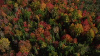 AX148_051 - 6k stock footage aerial video of a bird's eye view flying over a colorful forest, autumn, Cushing, Maine