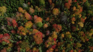 AX148_053 - 6k stock footage aerial video of a bird's eye view flying over colorful evergreen forest, autumn, Cushing, Maine