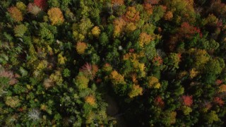 AX148_054 - 6k stock footage aerial video of a bird's eye view flying over colorful forest, autumn, Cushing, Maine