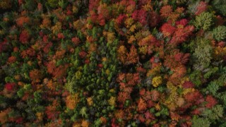 AX148_056 - 6k stock footage aerial video of a bird's eye view flying over a colorful forest, autumn, Cushing, Maine