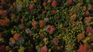 AX148_057 - 6k stock footage aerial video of a bird's eye view flying over a colorful forest in autumn, Cushing, Maine