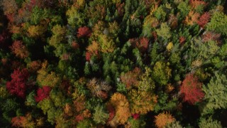 AX148_059 - 6k stock footage aerial video of a bird's eye view flying over a colorful forest, autumn, Cushing, Maine