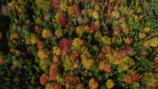 AX148_060 - 6k stock footage aerial video of a bird's eye view flying over colorful forest, autumn, Cushing, Maine