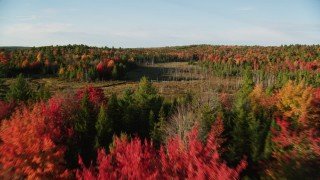 AX149_041 - 6K stock footage aerial video flying over clearing and dead trees toward colorful forest, autumn, Blue Hill, Maine