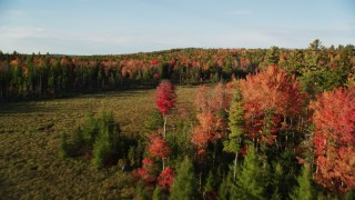 AX149_042 - 6K stock footage aerial video flying over clearing toward forest with colorful trees, autumn, Blue Hill, Maine