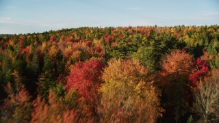 AX149_044 - 6K stock footage aerial video flying over a forest with colorful trees in autumn, Blue Hill, Maine