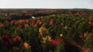 AX149_046 - 6K stock footage aerial video flying over colorful fall forest toward a clearing, autumn, Blue Hill, Maine