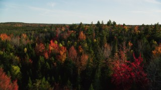 AX149_050 - 6K stock footage aerial video flying over forest with colorful fall foliage, Blue Hill, Maine