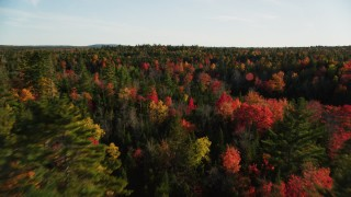 AX149_053 - 6K stock footage aerial video flying over colorful fall forest, Blue Hill, Maine
