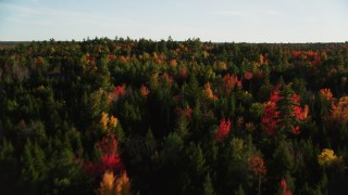 AX149_054 - 6K stock footage aerial video flying over colorful fall forest, Blue Hill, Maine