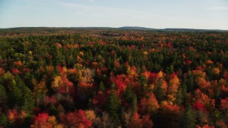 AX149_055 - 6K stock footage aerial video flying along evergreens among colorful forest in autumn, Blue Hill, Maine