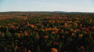AX149_056 - 6K stock footage aerial video flying by colorful trees in a forest in autumn, Blue Hill, Maine