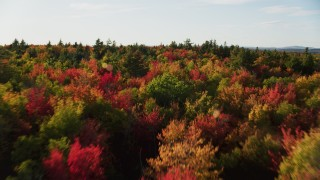 AX149_057 - 6K stock footage aerial video flying low over a forest with colorful fall trees, Blue Hill, Maine