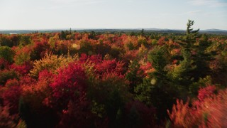 AX149_058 - 6K stock footage aerial video flying low over colorful trees in a forest, autumn, Blue Hill, Maine