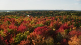 AX149_060 - 6K stock footage aerial video flying over a forest and colorful autumn trees, Blue Hill, Maine