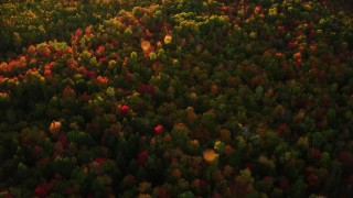AX149_184 - 6K stock footage aerial video of a bird's eye view flying over colorful forest in autumn, Searsmont, Maine, sunset