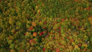 AX150_071 - 6K stock footage aerial video of a bird's eye view over brightly colored forest in autumn, Buckfield, Maine