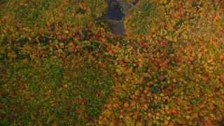 AX150_188 - 6K stock footage aerial video of a bird's eye view over forest, reveal pond, autumn, White Mountains, New Hampshire