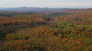 AX150_234 - 6K stock footage aerial video flying over dense, colorful forest, autumn, Bethlehem, New Hampshire