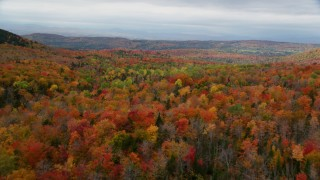 AX150_330 - 6K stock footage aerial video flying over dense, colorful forest in autumn, overcast, Orange, Vermont