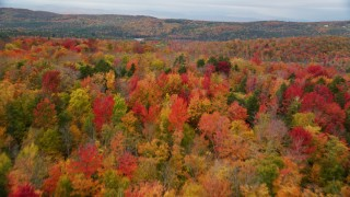 AX150_333 - 6K stock footage aerial video flying over brightly colored, dense forest, autumn, overcast, Orange, Vermont
