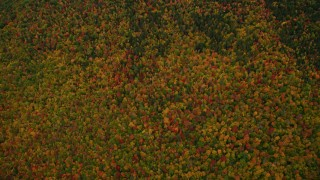 AX151_116 - 6K stock footage aerial video of a bird's eye view over forest of colorful trees, autumn, Wilmot, New Hampshire