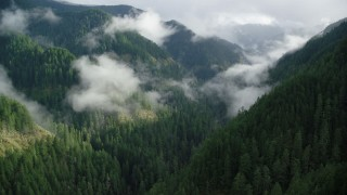 AX154_045 - 6K stock footage aerial video following Eagle Creek Trail through a wooded canyon in the Cascade Range, Hood River County, Oregon