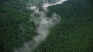 AX154_054 - 6K stock footage aerial video of a bird's eye view of mist over Eagle Creek Trail in canyon with evergreens in the Cascade Range, Hood River County, Oregon