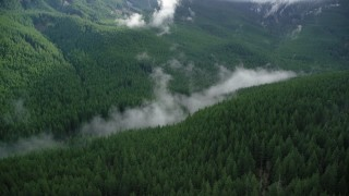 AX154_056 - 6K stock footage aerial video of mist hanging over evergreen trees at the bottom of a canyon in the Cascade Range, Hood River County, Oregon