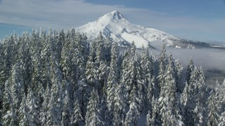 AX154_115 - 6K stock footage aerial video tilting from forest to reveal clouds and Mount Hood, Cascade Range, Oregon