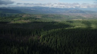 AX154_134 - 6K stock footage aerial video flying over vast evergreen forest in the Cascade Range, Hood River Valley, Oregon