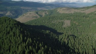AX154_145 - 6K stock footage aerial video flying over evergreen forest to approach clear cut logging areas near Dee, Oregon