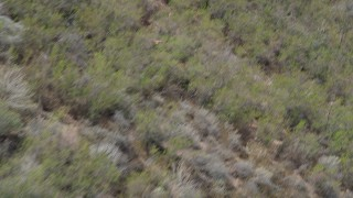 AX42_007 - 5K stock footage aerial video of tracking a hawk flying over scorched slopes and surviving trees in the Santa Monica Mountains, California