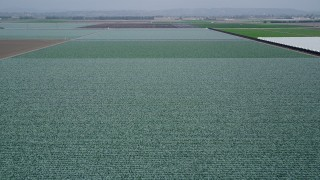 AX42_025 - 5K stock footage aerial video of approach and fly over a field of crops, Camarillo, California