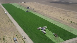AX42_043 - Aerial stock footage of 5K aerial  video flying away from farm workers working a crop field to reveal a second group, Camarillo, California