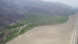 AX42_051 - 5K stock footage aerial video approach an orchard at the base of mountains, Point Mugu, California