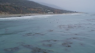 AX42_081 - Aerial stock footage of 5K aerial  video fly low over the ocean to pass surfers waiting for waves near the shore, Malibu, California