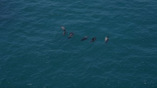 AX42_090 - 5K stock footage aerial video of tracking seven seals in the Pacific Ocean, Malibu, California