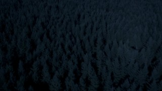 AX48_043_DFN - Aerial stock footage of 4K day for night color corrected aerial footage of evergreen trees, tilt to approach and fly over a clear cut area, King County, Washington
