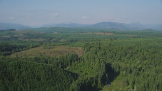 AX48_046 - 5K stock footage aerial video fly over vast evergreen forest to approach a clear cut area in King County, Washington