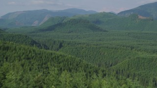 AX48_052 - 5K stock footage aerial video fly over evergreen trees to reveal a green hill in King County, Washington