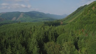 AX48_056 - 5K stock footage aerial video fly over evergreen forest to reveal a clear cut area on a mountain slope and a road in King County, Washington