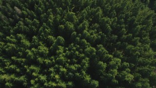 AX48_072 - 5K stock footage aerial video of a bird's eye flying over an evergreen forest, King County, Washington