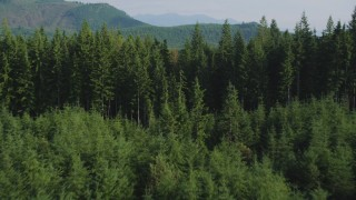 AX48_073 - 5K stock footage aerial video of flying low over an evergreen forest, King County, Washington