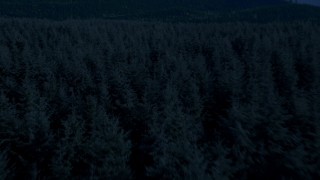 AX48_074_DFN - Aerial stock footage of 4K day for night color corrected aerial footage of of flying low over evergreen trees, King County, Washington