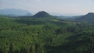 AX48_077 - 5K stock footage aerial video fly over evergreen forest to reveal a green hill and logging areas in King County, Washington