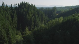 AX48_087 - 5K stock footage aerial video approach a group of tall evergreen trees in the Cascade Range, Washington