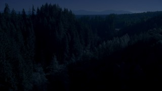 AX48_087_DFN - Aerial stock footage of Day for night color corrected aerial footage of a group of tall evergreen trees in the Cascade Range, Washington